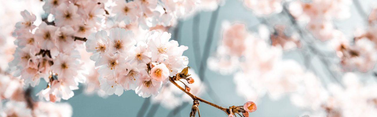 Bouquet Florist Online